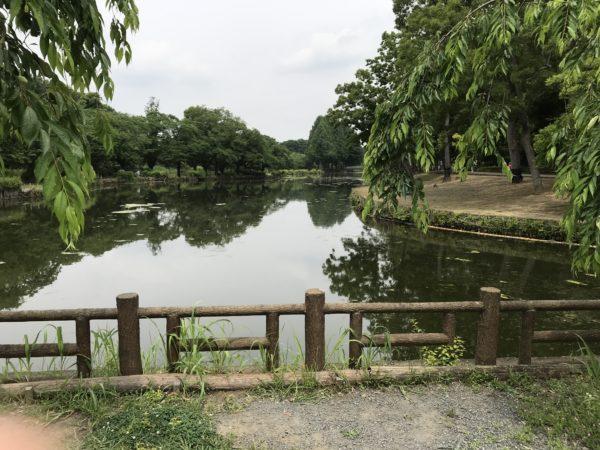 上尾丸山公園の池の写真