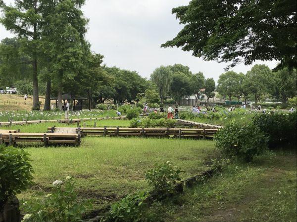 上尾丸山公園内湿原の写真