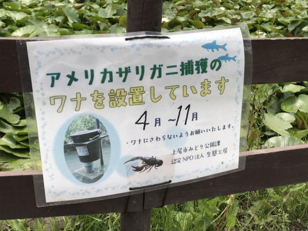 上尾丸山公園水芭蕉池のアメリカザリガニの案内写真