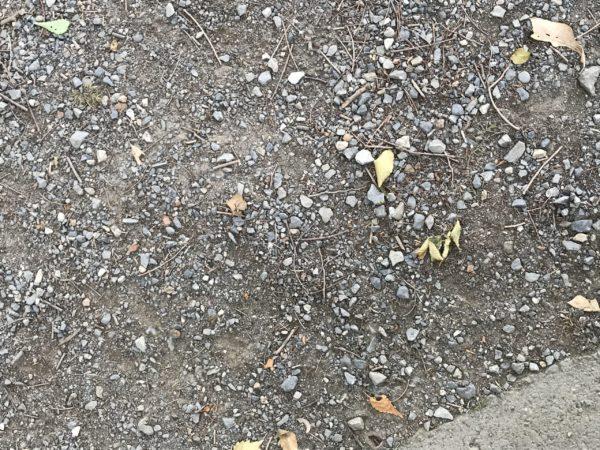 上尾丸山公園地面の写真