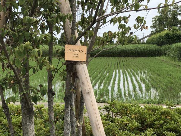 小仙波八反田公園の木の写真