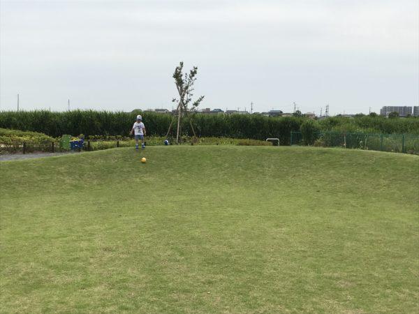 小仙波八反田公園の芝生でボールを転がす子供の写真