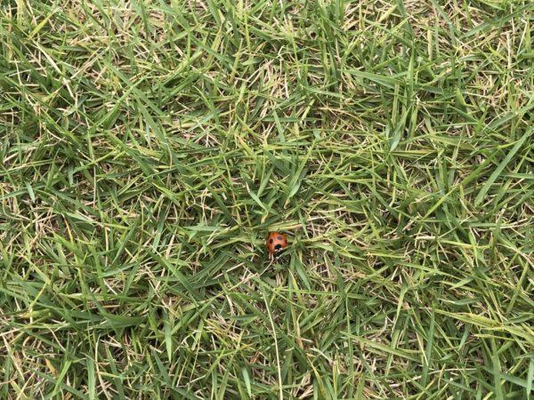 小仙波八反田公園芝の状態の写真