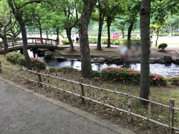 上尾丸山公園内小川の写真