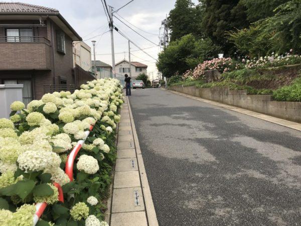 指扇氷川神社入口手前のあじさい