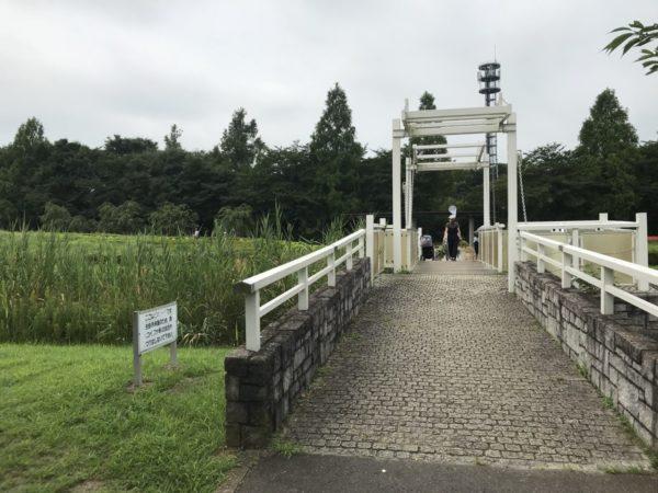 木製の橋の写真