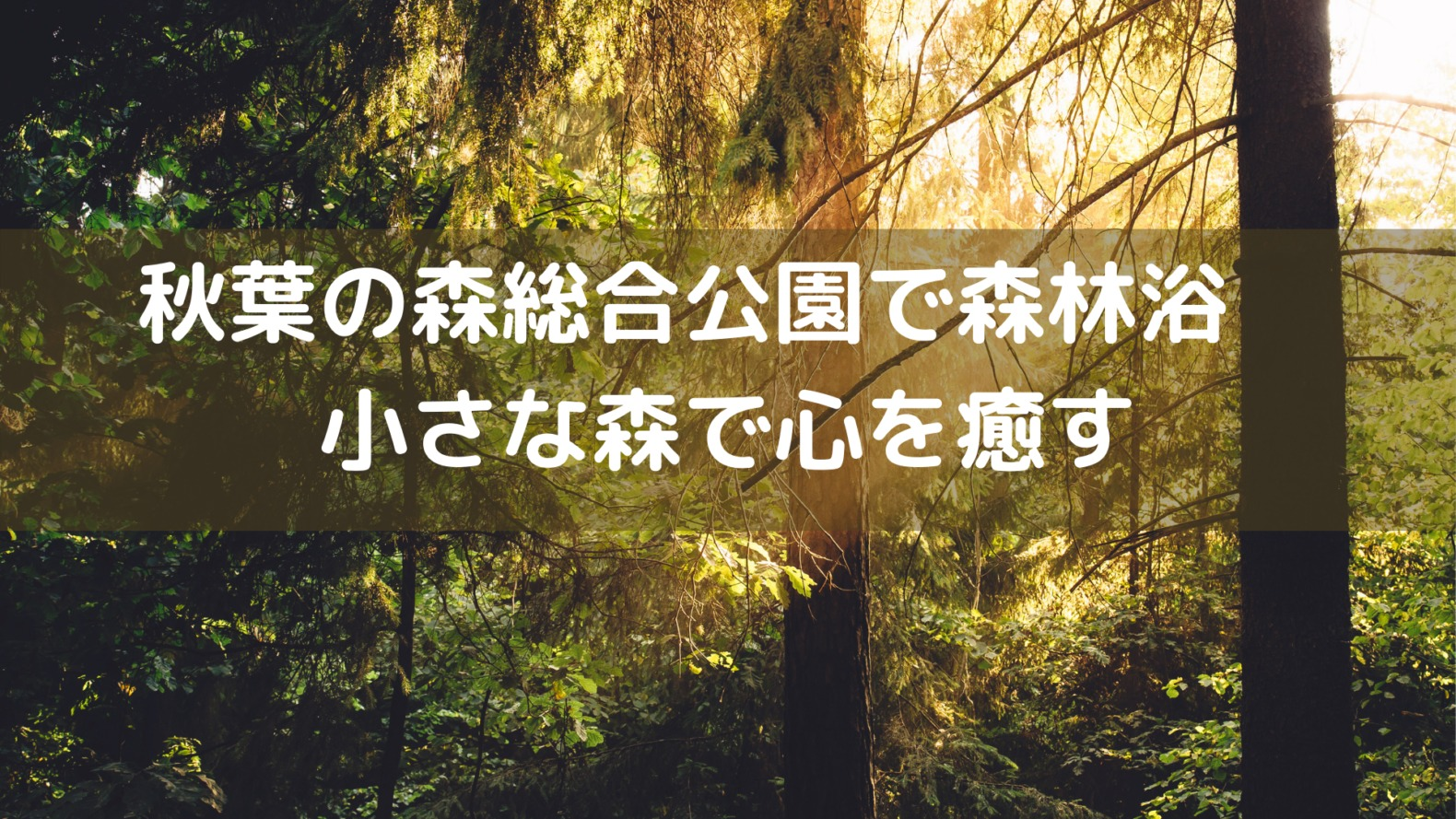秋葉の森総合公園で森林浴 小さな森で心を癒すスポットブログアイキャッチ画像