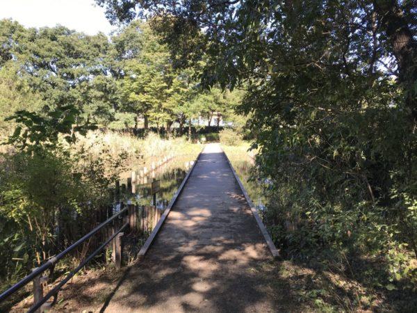 秋葉の森公園の自然保護ゾーンの橋の写真