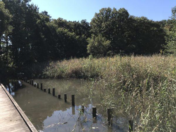 秋葉の森公園の自然保護ゾーンの池の写真