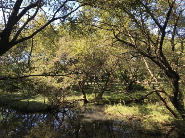 秋葉の森公園の自然保護ゾーンの自然池の写真