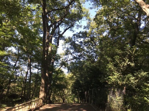 秋葉の森公園の自然保護ゾーンの森林の写真
